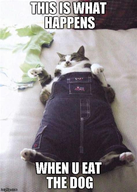 fat cat memes hot imgflip