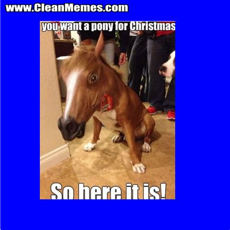 Funny Pony Memes - christmas memes clean memes the best the most online