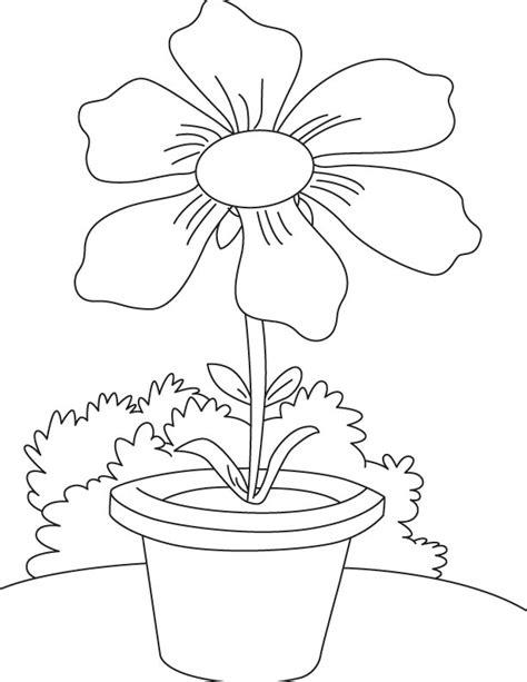 cosmos flower coloring page 6 petal cosmos coloring page download free 6 petal