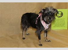 Zoe's Friends Animal Rescue - HOORAY! I'M ADOPTED!276 ... Lying Lips Song