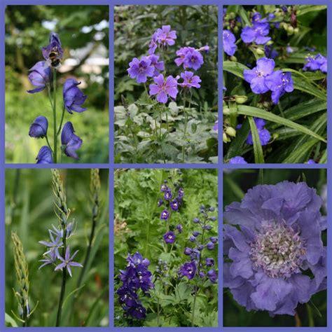 witte border bloemen border aanleggen met blauwe bloemen border aanleggen op
