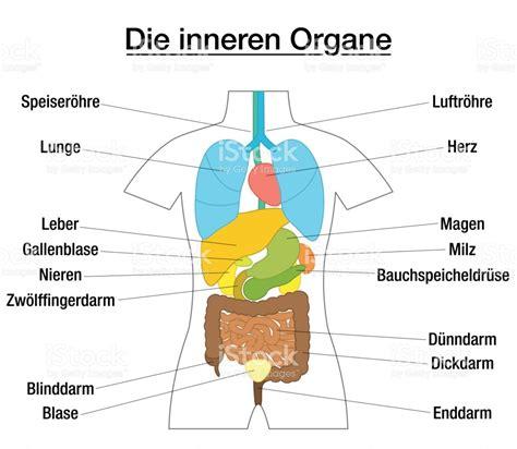 innere organe des menschen schaubild tesla innere organe vinatge deutsche anatomie druck