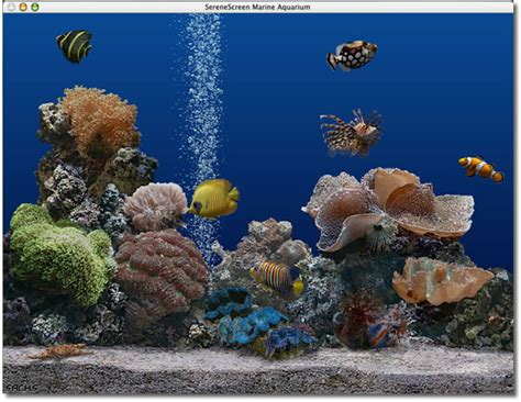 serenescreen marine aquarium download serenescreen marine aquarium mac download
