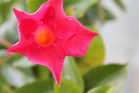 bloemen liefde liefde voor bloemen fotografie lisanne leeft