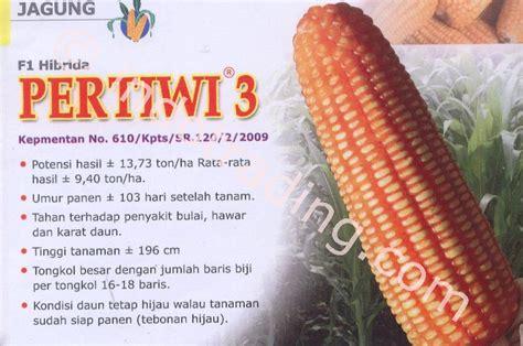 Supplier Jagung Pakan Ternak jual benih jagung hibrida harga murah bogor oleh ud