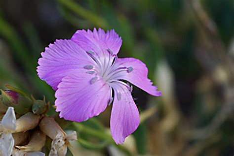 fiore autunnale i fiori autunnali fiori