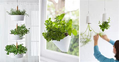 indoor garden idea hang  plants   ceiling