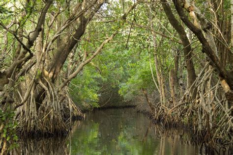 Long And Foster recounting recent fire history of everglades national park