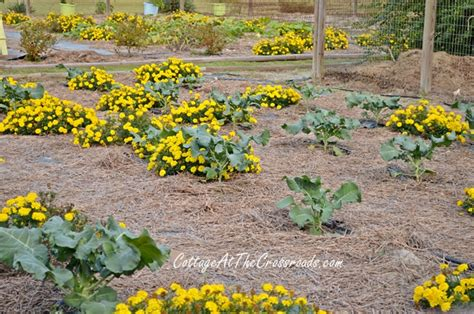 fall vegetable garden ideas inspiring garden ideas the micro gardener s clipboard on hometalk hometalk