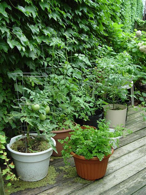 vegetable garden in pots veggie gardening without the garden garden housecalls
