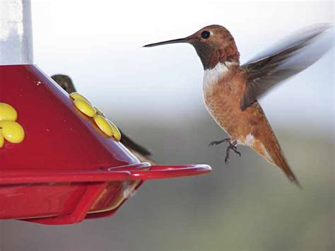 when to put humming bird feeders out bird feedersbird