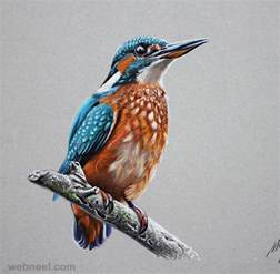 color bird 25 stunning hyper realistic drawings and tutorials