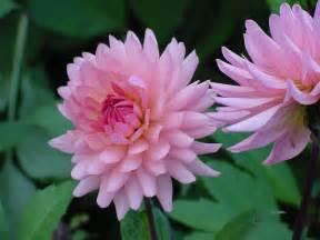 Flower Com Flowers - denmark flower flickr photo sharing