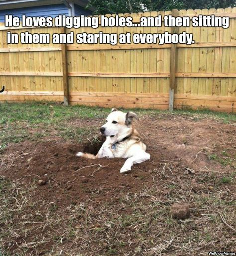 puppy digging digging holes breeds picture
