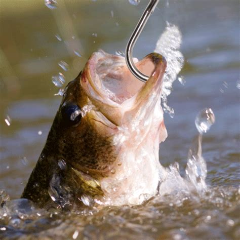 Pictures Of Fish On A Hook