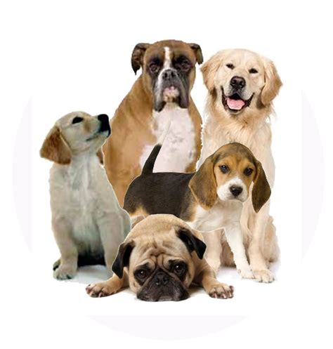 puppy png index of images