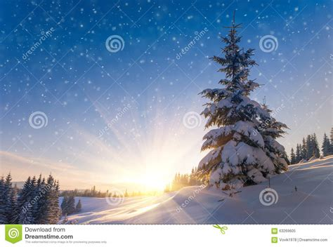 view  snow covered conifer trees  snow flakes  sunrise merry christmass   years