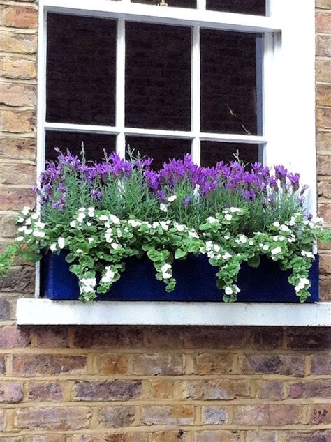 window box baskets 517 best images about hanging baskets and window boxes on
