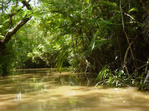 amazon forest science 8 the amazon deforestation article date wed