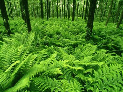 beautiful green color color green is beautiful nature green forest