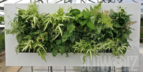 Bild Mit Echten Pflanzen by Lebende Bilder Pflanzen Als Lifestyle Blumen Schwarz