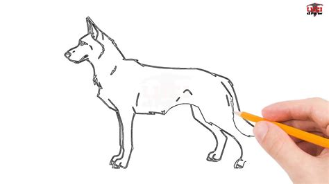 How To Draw A German Shepherd Puppy