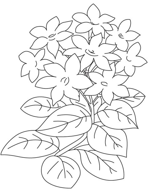 jasmine flower coloring pages coloring beach