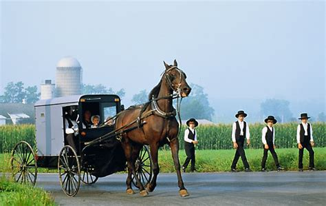 the bishop s an amish the amish of bee county books catholic bishops cry foul amish are exempt from obamacare