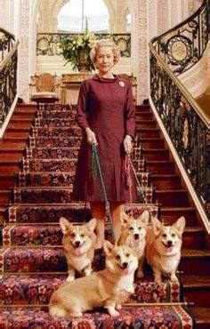 how many corgis does the queen have what breed of dogs does the queen have quora