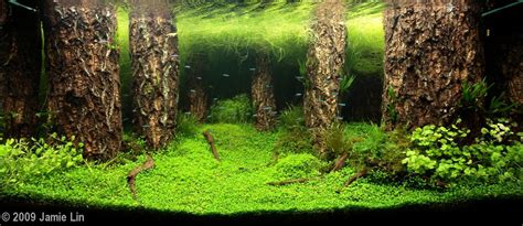 Aquascape Forest by 2009 Aga Aquascaping Contest 23