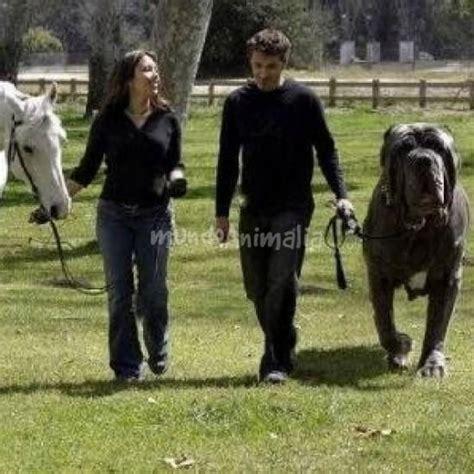mujer penetrada por perro mas grande del mundo ver videos los perros m 225 s grandes del mundo taringa