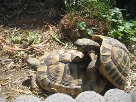 turtle shoe makes hilarious sounds