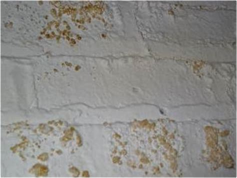 mold and mildew everdry waterproofing wisconsin