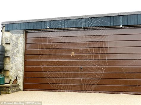 Garage Web The Wide Web Pensioner Finds Spider S Web 6ft