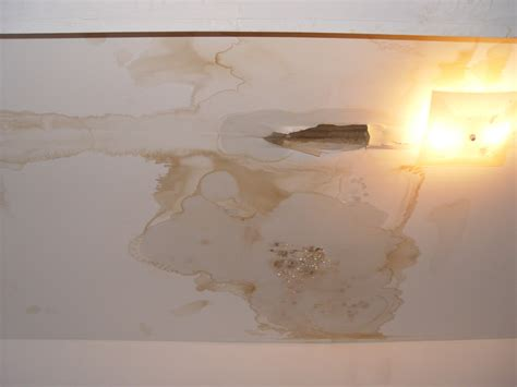 ceiling water spots can be the sign of a leaky