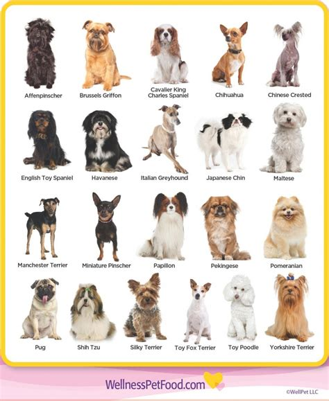 types of dogs chart small breeds chart the 7 breed groups explained american kennel club