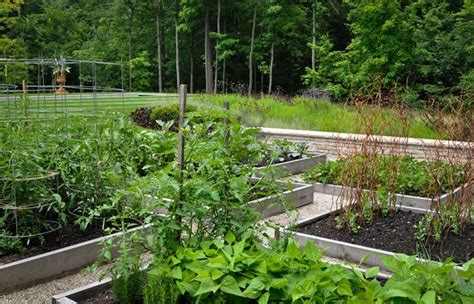 52 best images about edible gardening on pinterest gardens raised beds and growing lavender