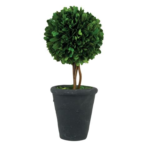 wholesale topiary 5 quot boxwood topiary with black pot pride garden products