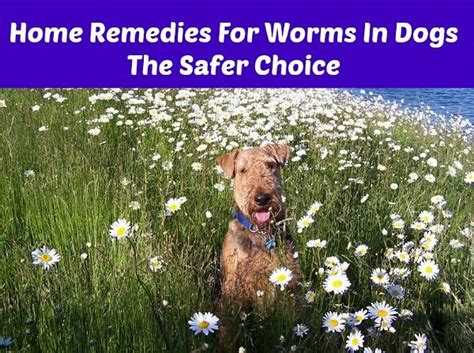 home remedies for worms in dogs the safer choice the