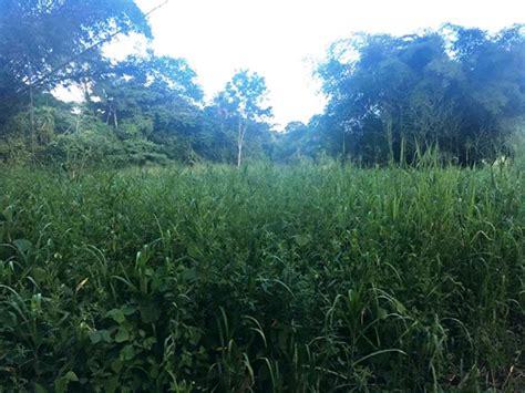 acres  flat deeded freehold land moruga ttemarket