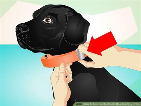 how to use electronic collars how to use an electronic collar 10 steps autos post