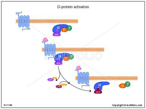 protein activation spektroskopie amorpher und kristalliner