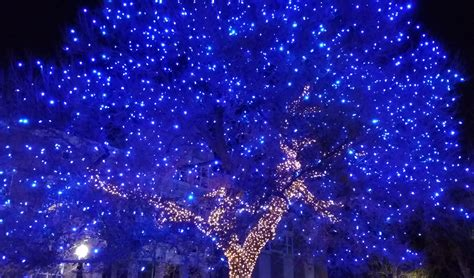 Trijee Blue big blue tree