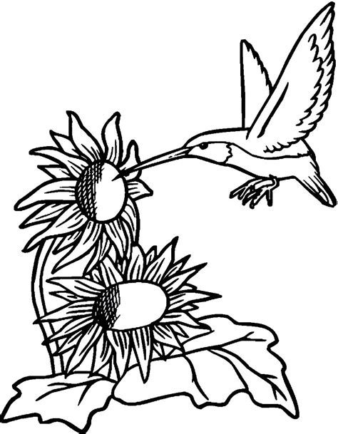 printable coloring pages hummingbirds printable hummingbird coloring pages coloring me