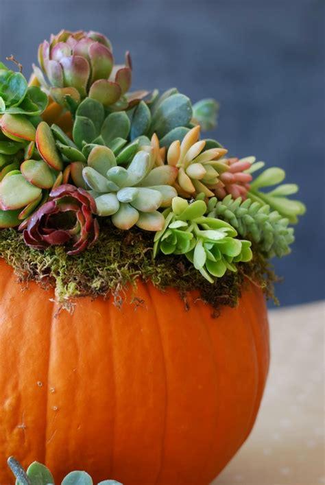 the perfect diy pumpkin seed flower decoration cret 237 que diy pumpkin succulent harvest decoration simply