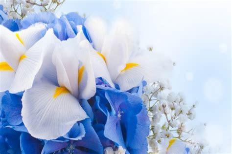 imagenes de rosas blancas y azules ramo con flores blancas y azules 33933