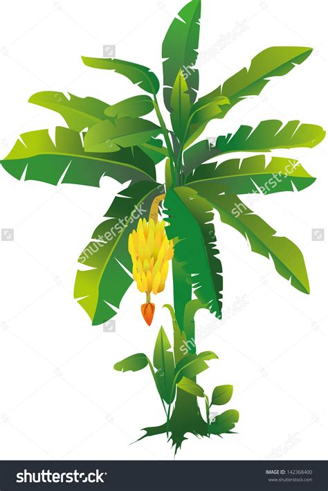 Draw A Vase Tree Banana Clipart Explore Pictures