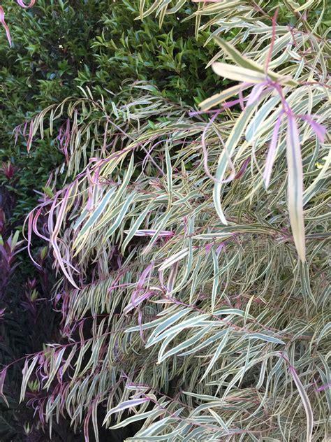 pink peppermint garden radio round up may 6 7
