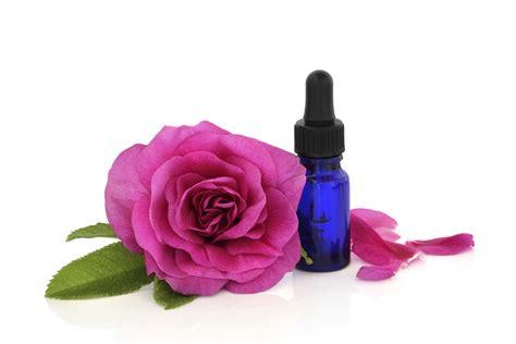 imagenes flores bach beneficios de las flores de bach bienestar180