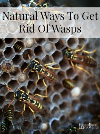 How To Get Rid Of Wasps In Backyard by 17 Best Ideas About Get Rid Of Wasps On
